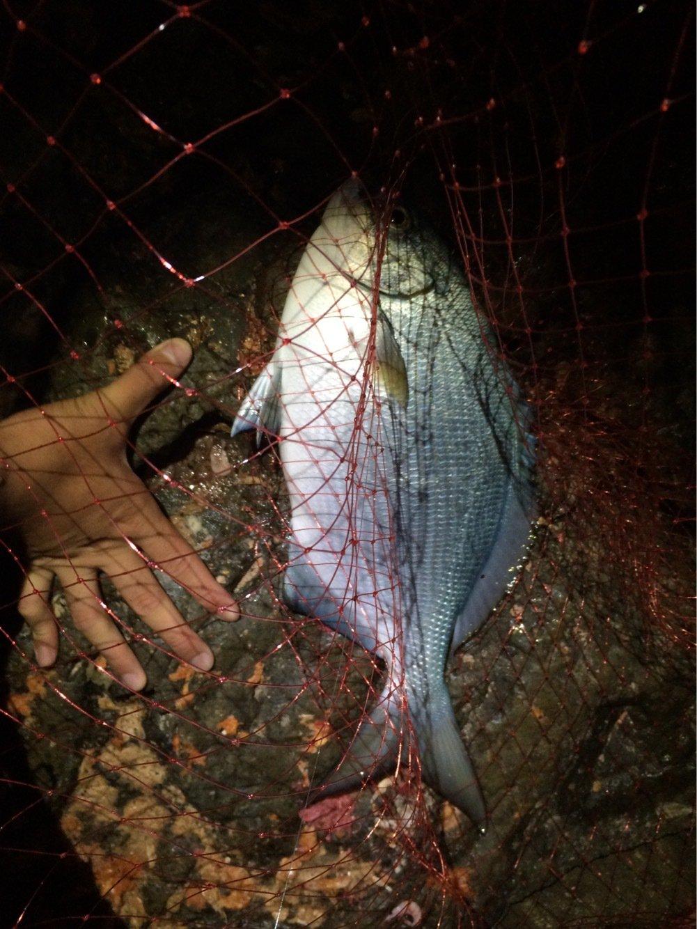 頭にルアーさんの投稿画像,写っている魚はイスズミ