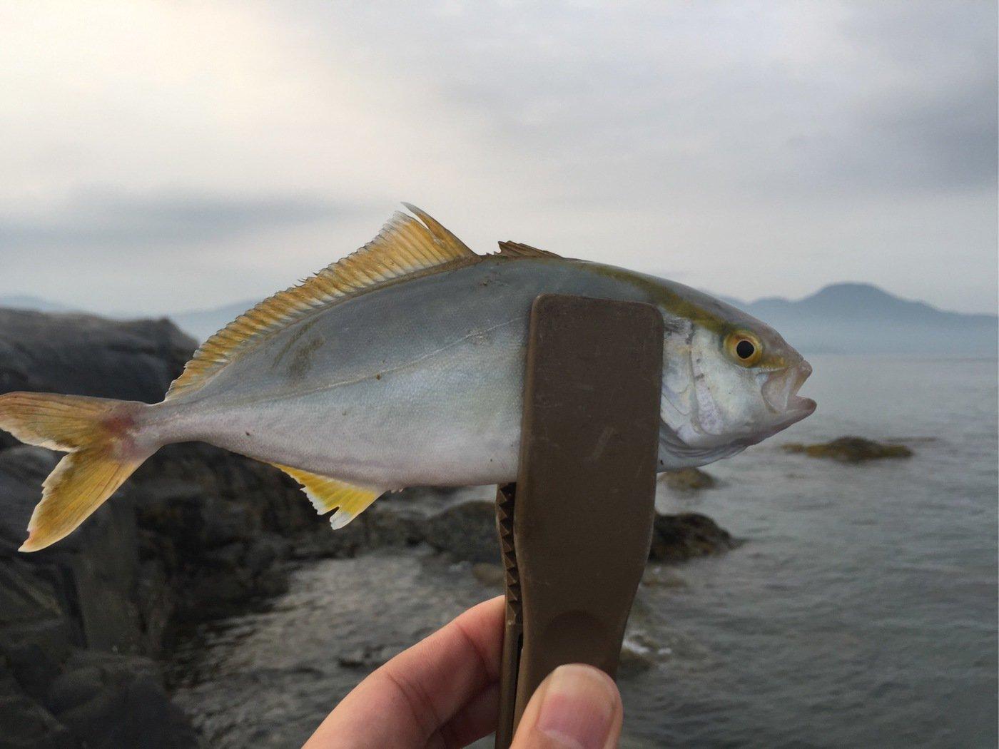 てつさんの投稿画像,写っている魚はカンパチ