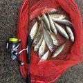 キャストアウェイさんの福井県あわら市での釣果写真