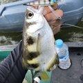 ラテス81さんの沖縄県八重山郡での釣果写真