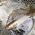 はるかっちょさんの岩手県九戸郡での釣果写真