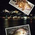 snufkin49さんの長崎県長崎市でのマダイの釣果写真