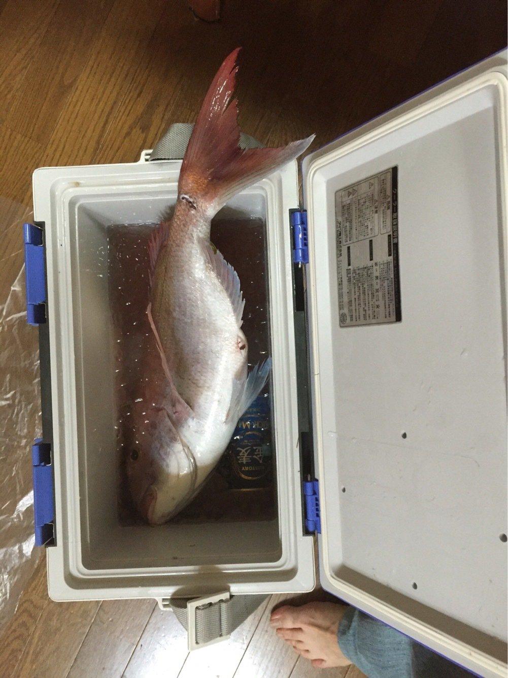 hata-yanさんの投稿画像,写っている魚はマダイ