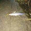 taka.3_3.takeさんの三重県桑名郡での釣果写真