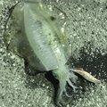greendさんの千葉県八千代市での釣果写真