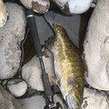 ラベルガさんの新潟県中魚沼郡での釣果写真