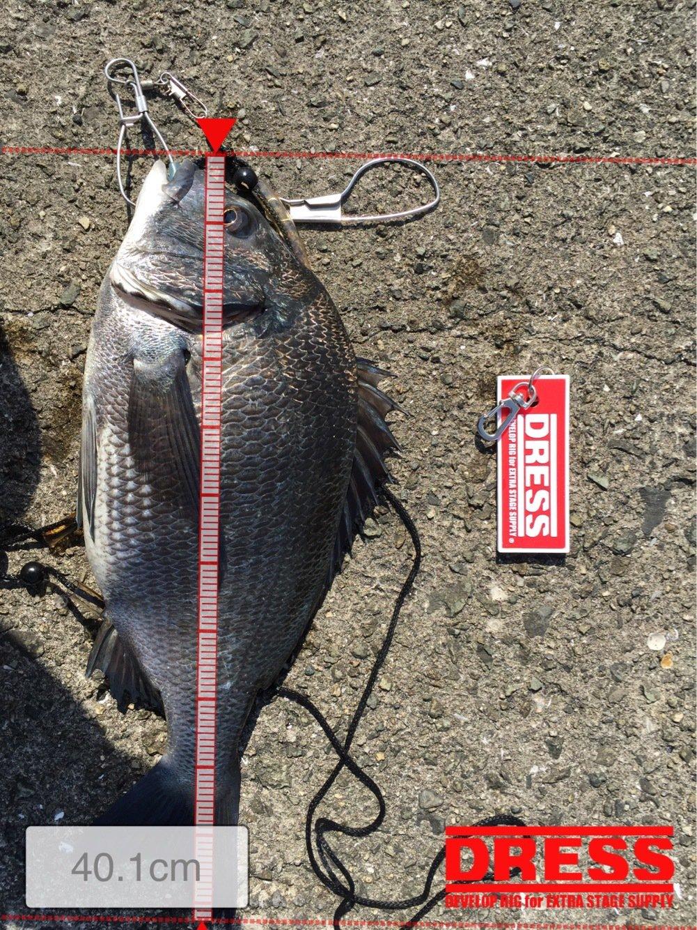 林谷 昭宏さんの投稿画像,写っている魚はクロダイ