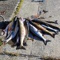 Yoshitakaさんの北海道亀田郡での釣果写真