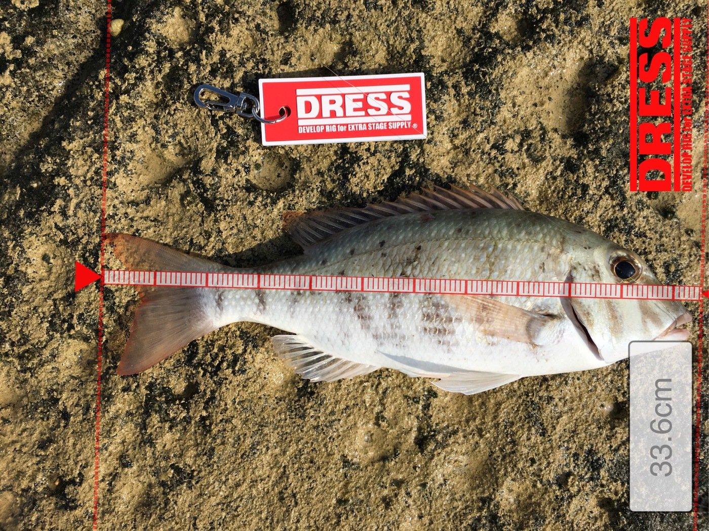 Shinさんの投稿画像,写っている魚はハマフエフキダイ