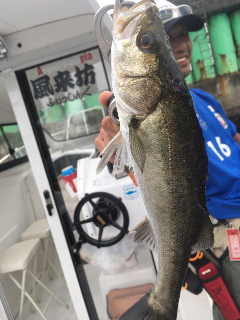 コゥイさんの投稿画像,写っている魚は
