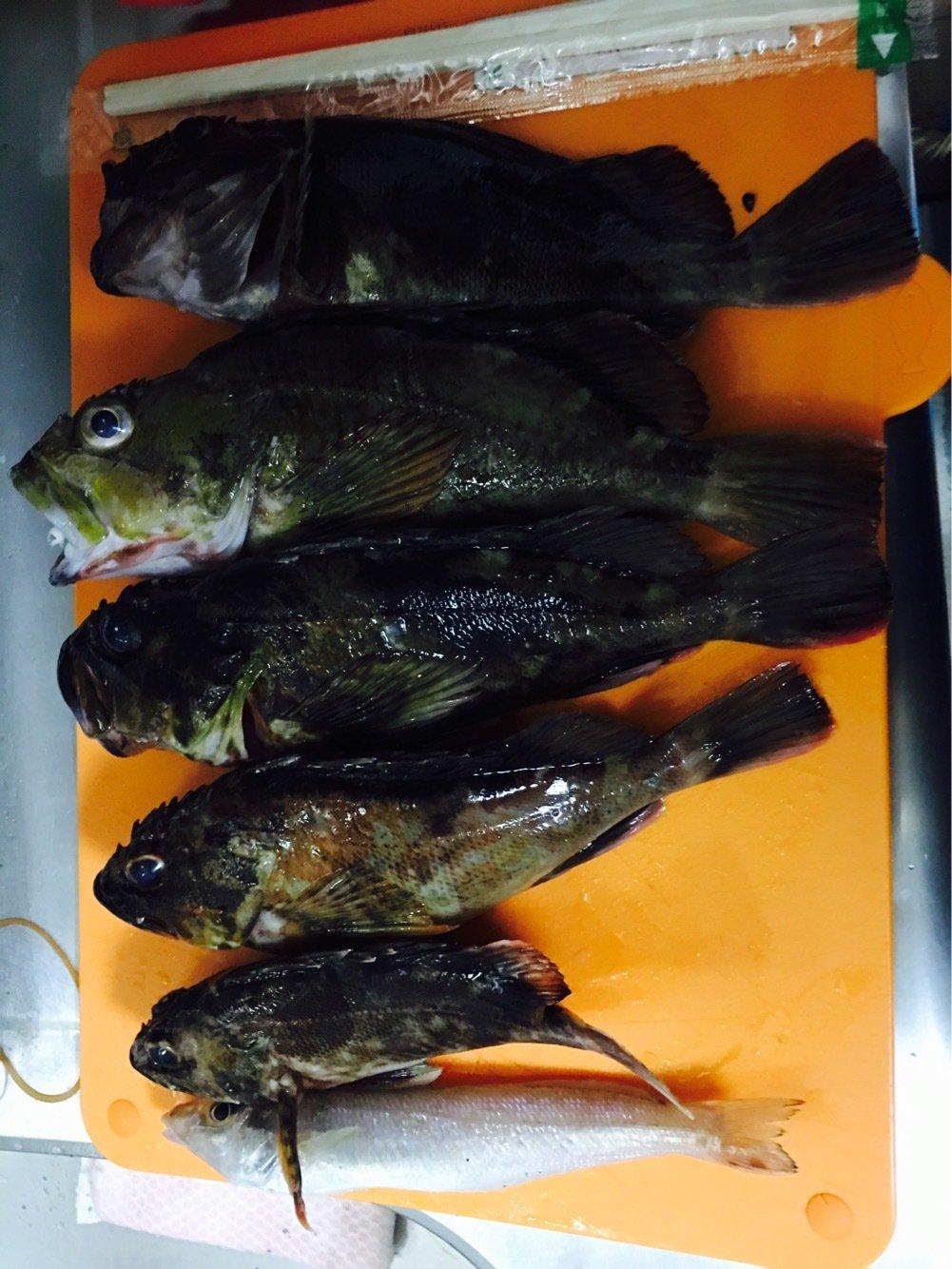 まいこさんの投稿画像,写っている魚はカサゴ