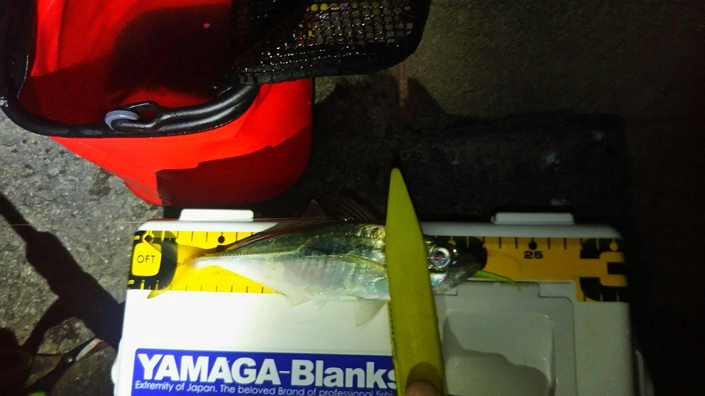 てつぶんさんの投稿画像,写っている魚はアジ