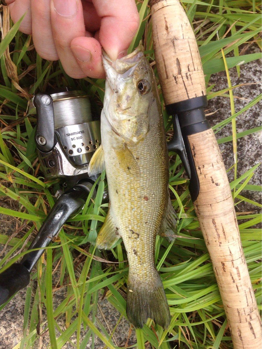 isanさんの投稿画像,写っている魚はスモールマウスバス