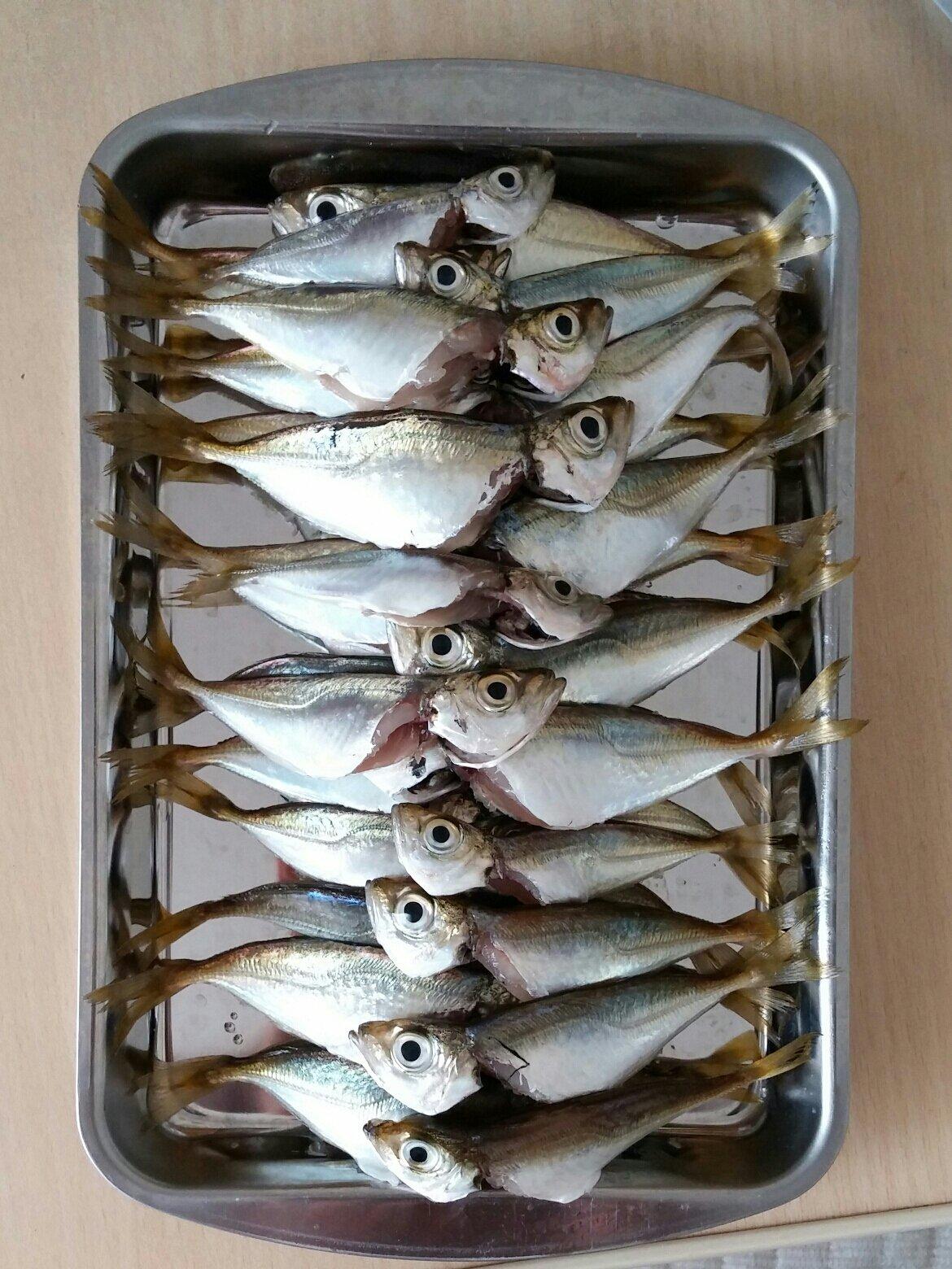 かなぶんぶんさんの投稿画像,写っている魚はアジ
