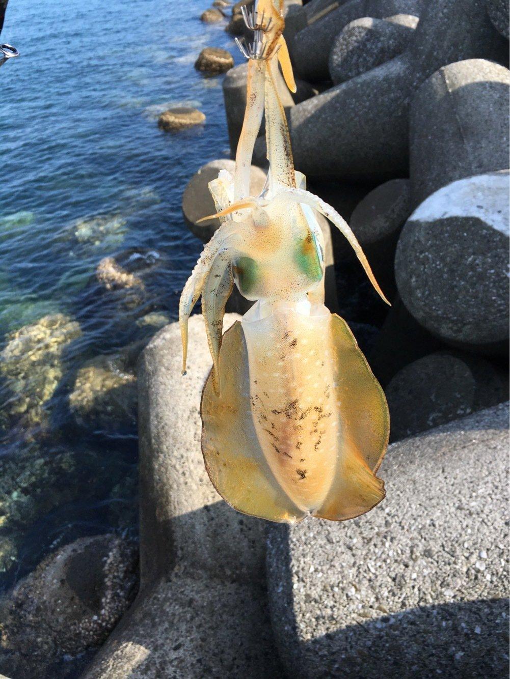 墨人さんの投稿画像,写っている魚はアオリイカ
