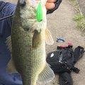 ニゴイさんの茨城県潮来市での釣果写真
