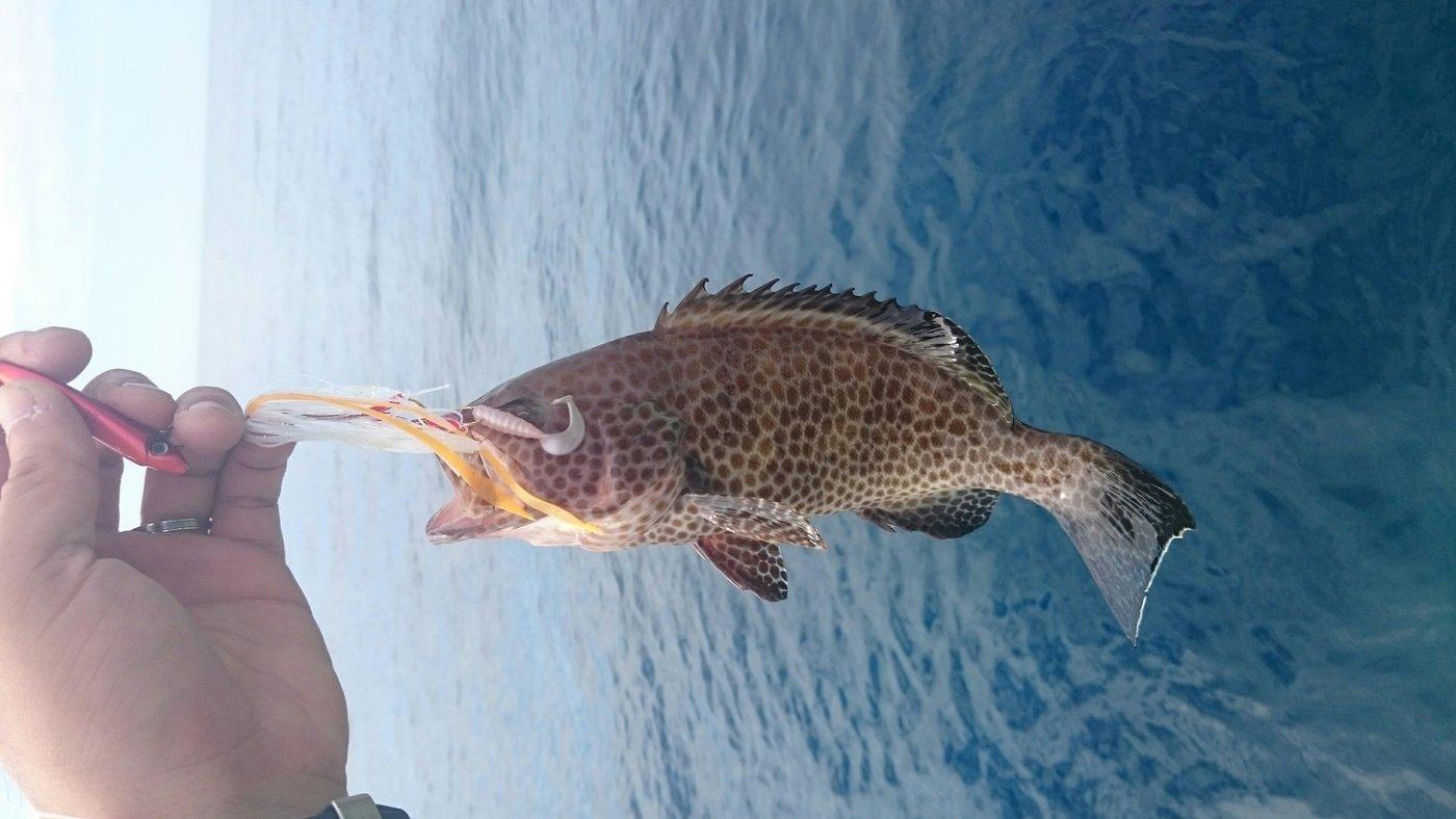 ミットシーさんの投稿画像,写っている魚はオオモンハタ