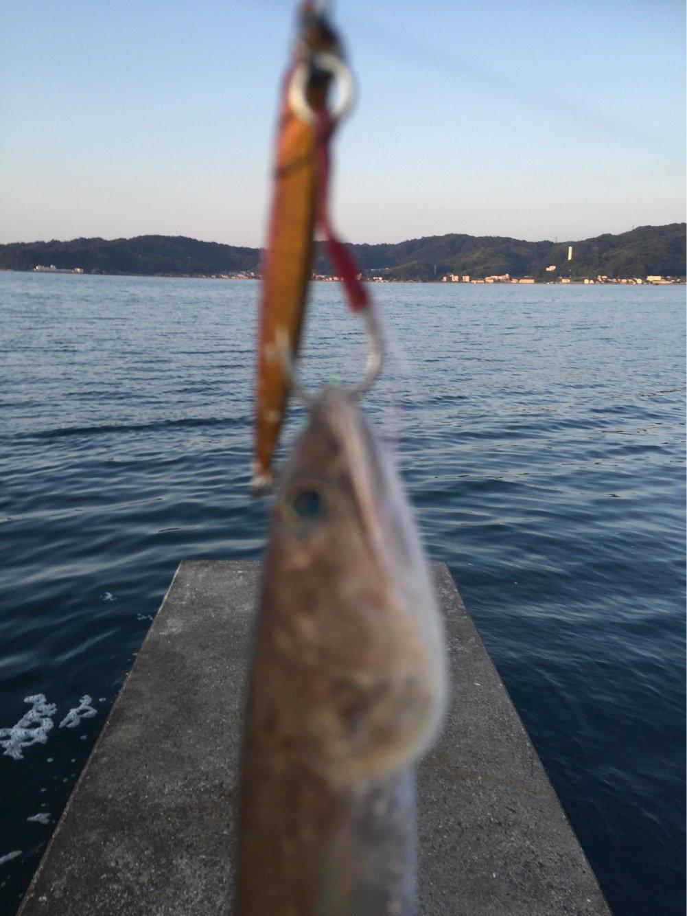 まるおさんの投稿画像,写っている魚はエソ