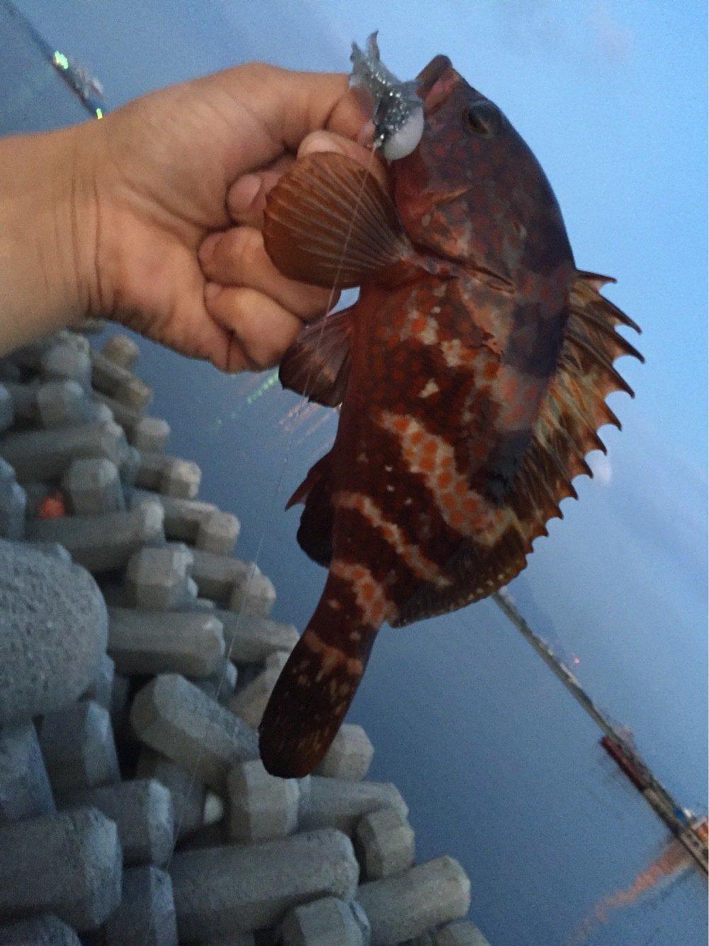 シュウさんの投稿画像,写っている魚はキジハタ