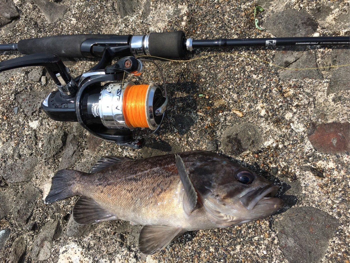 Murakameepさんの投稿画像,写っている魚はソイ
