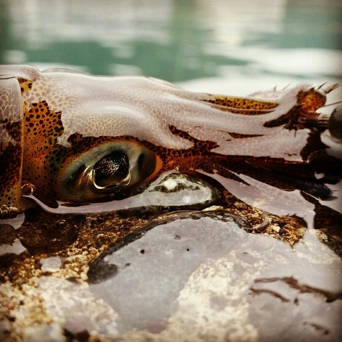 エギ王さんの投稿画像,写っている魚はアオリイカ