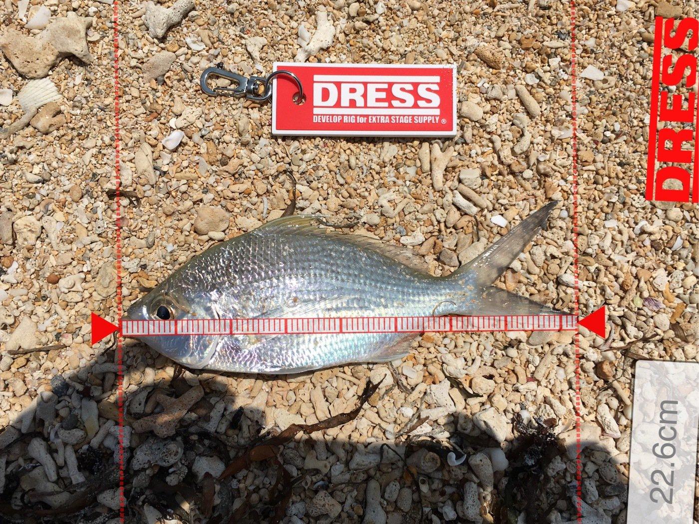Shinさんの投稿画像,写っている魚はアオダイ