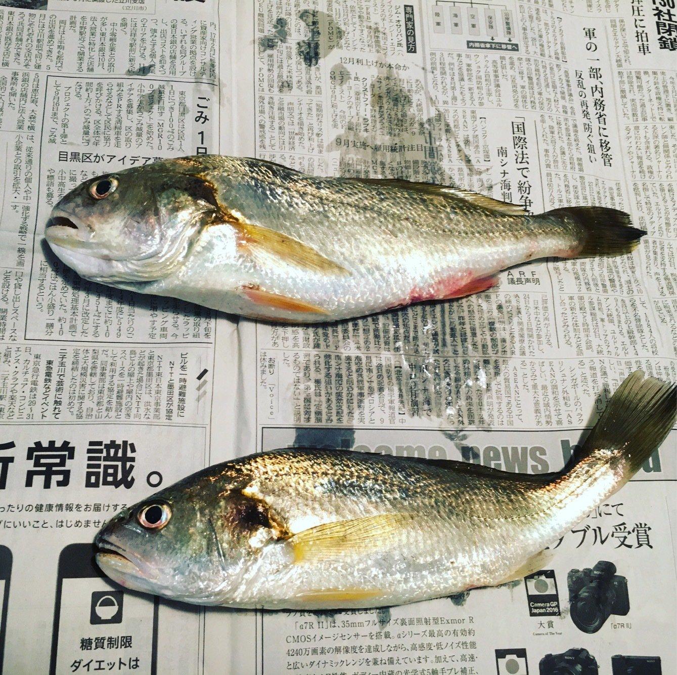 そうちゃんさんの投稿画像,写っている魚はイシモチ
