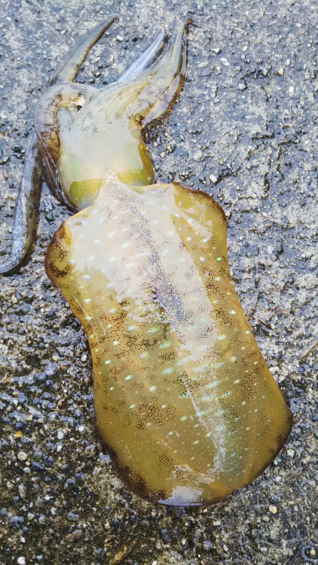 銀の山さんの投稿画像,写っている魚は