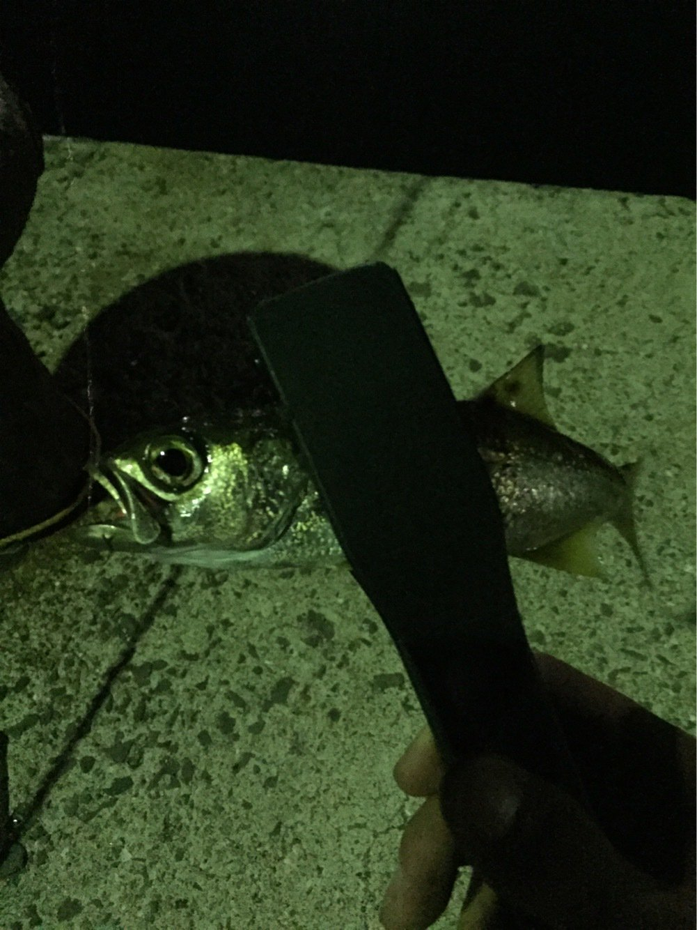 Rさんの投稿画像,写っている魚はバラムツ