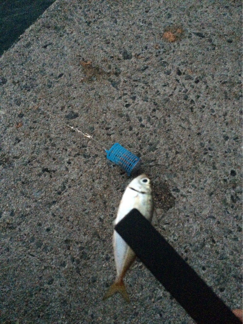 ひろしぺんさんの投稿画像,写っている魚はアジ