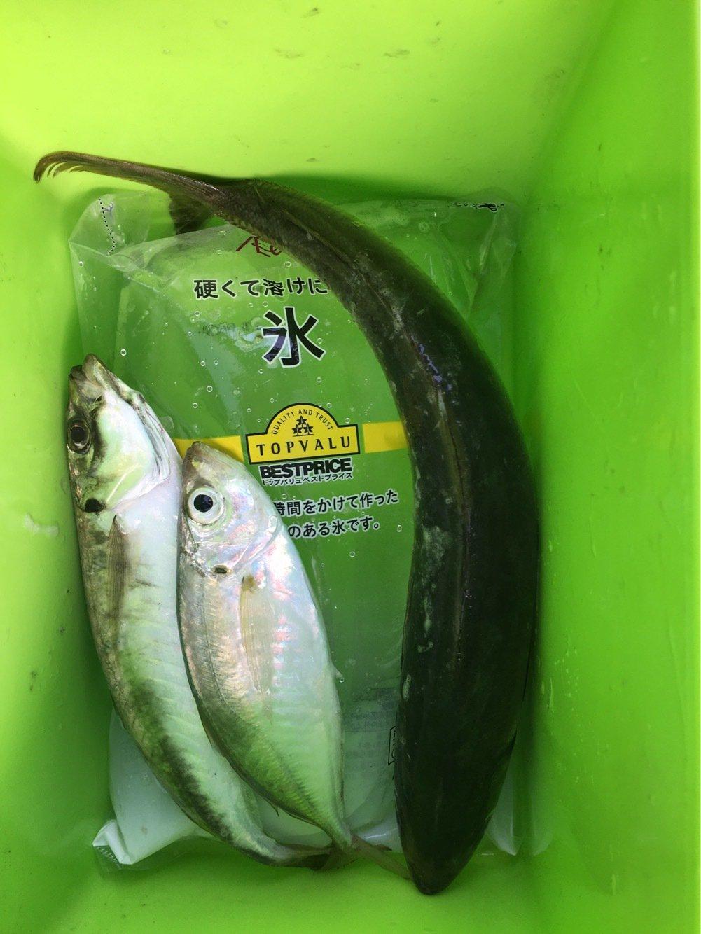 foresterさんの投稿画像,写っている魚はアジ