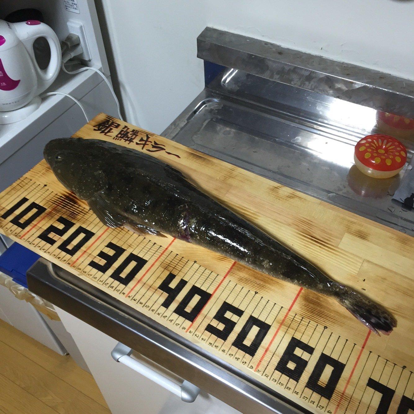 青日 千さんの投稿画像,写っている魚はコチ