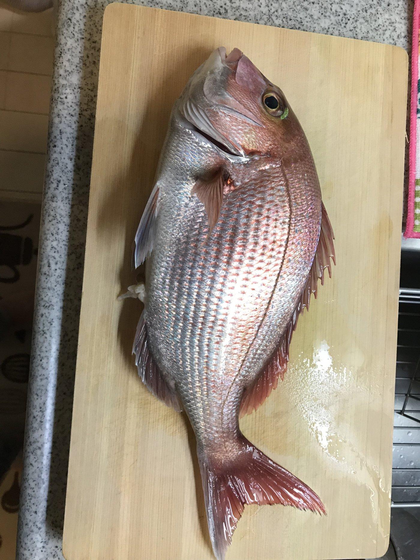 こしさんの投稿画像,写っている魚はマダイ,