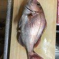 こしさんの千葉県旭市での釣果写真