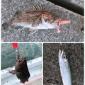 GKさんの北海道白老郡での釣果写真
