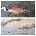 yujiさんの静岡県熱海市でのカサゴの釣果写真