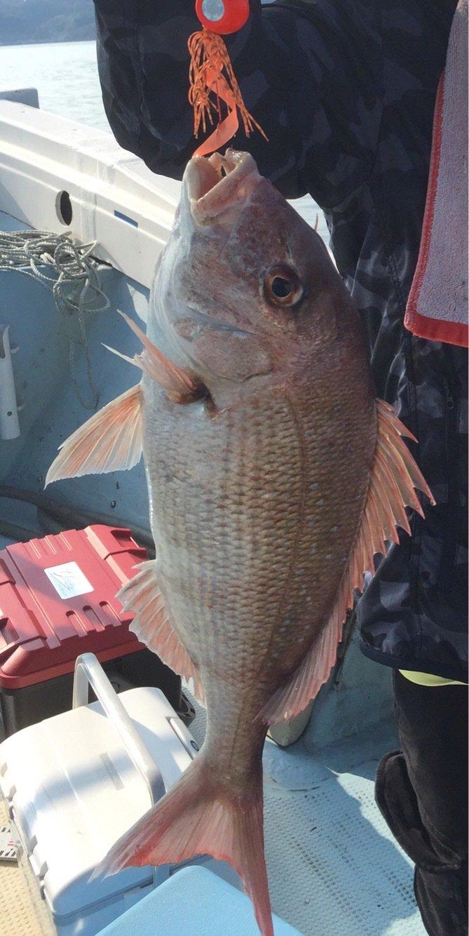 KIさんの投稿画像,写っている魚はマダイ