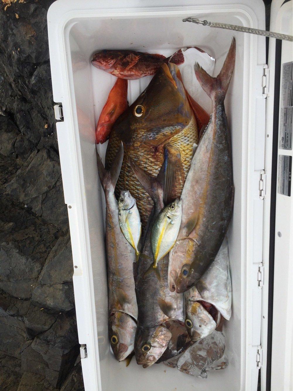 なおさんの投稿画像,写っている魚はカンパチ