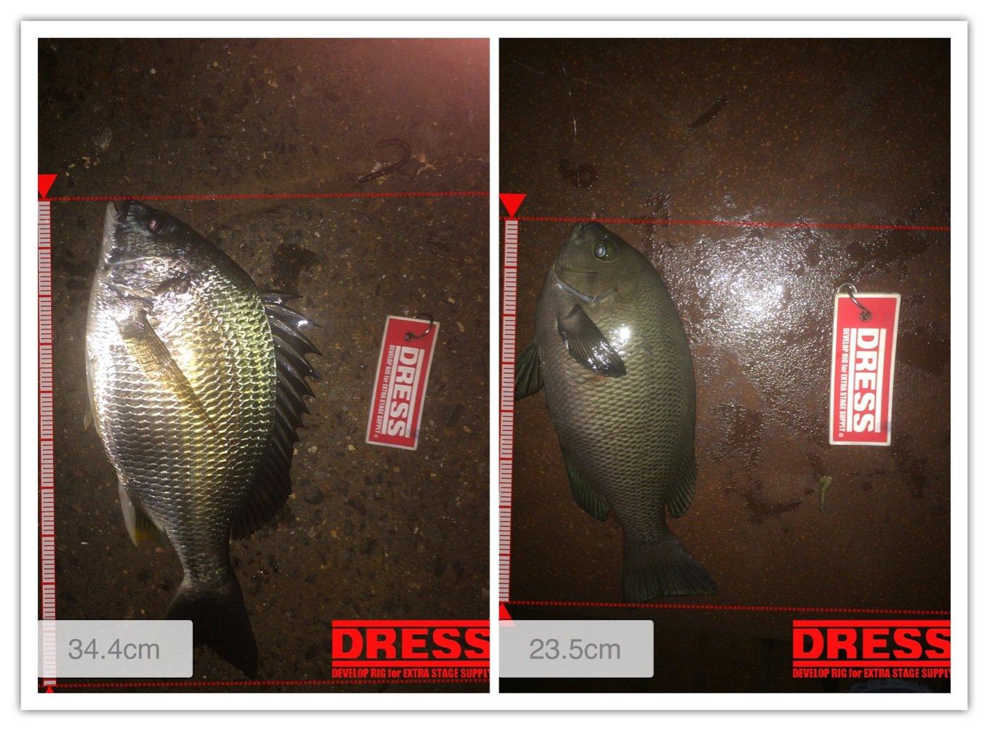 ナオキさんの投稿画像,写っている魚はクロダイ