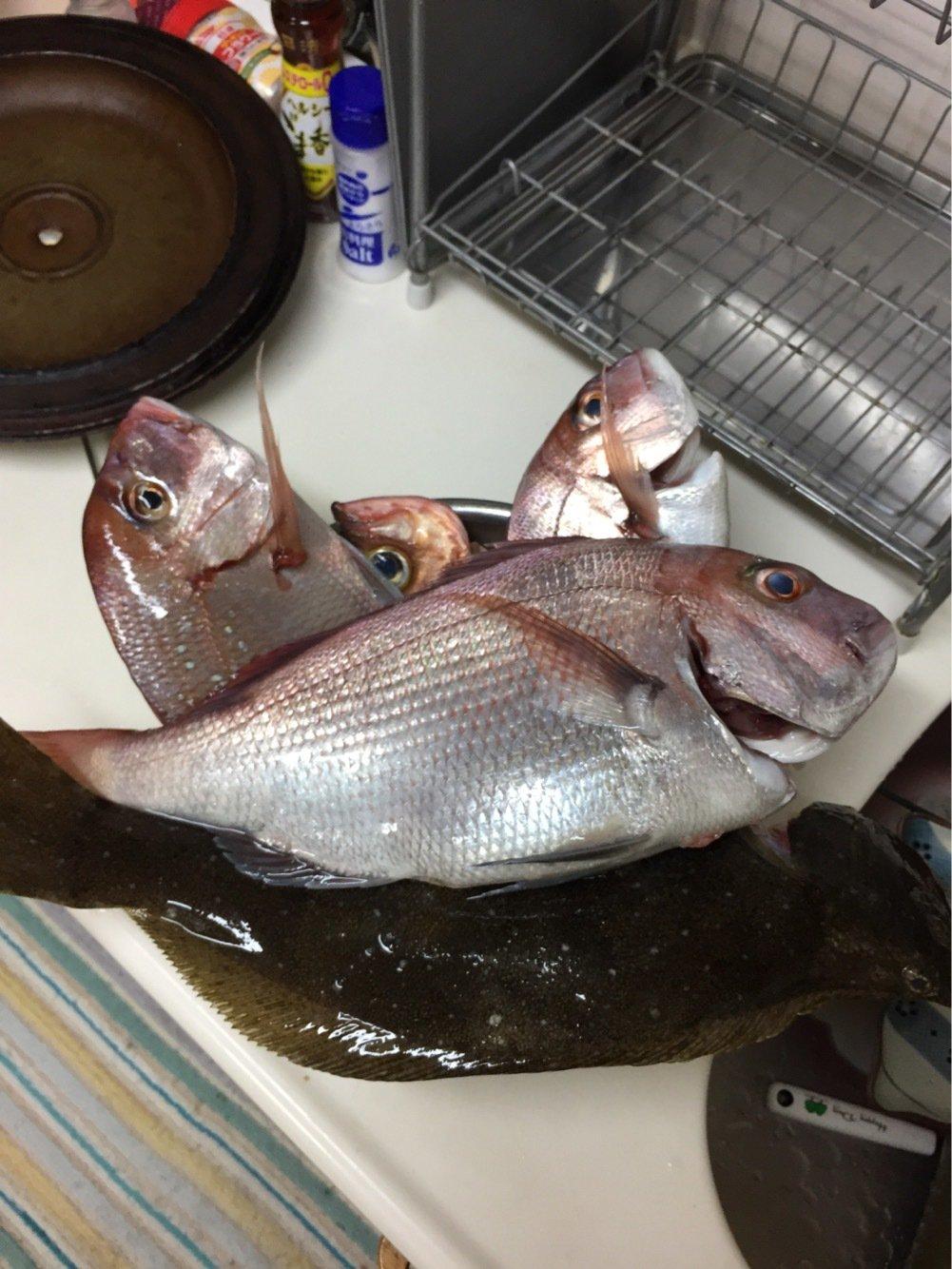 ひろひさんの投稿画像,写っている魚は