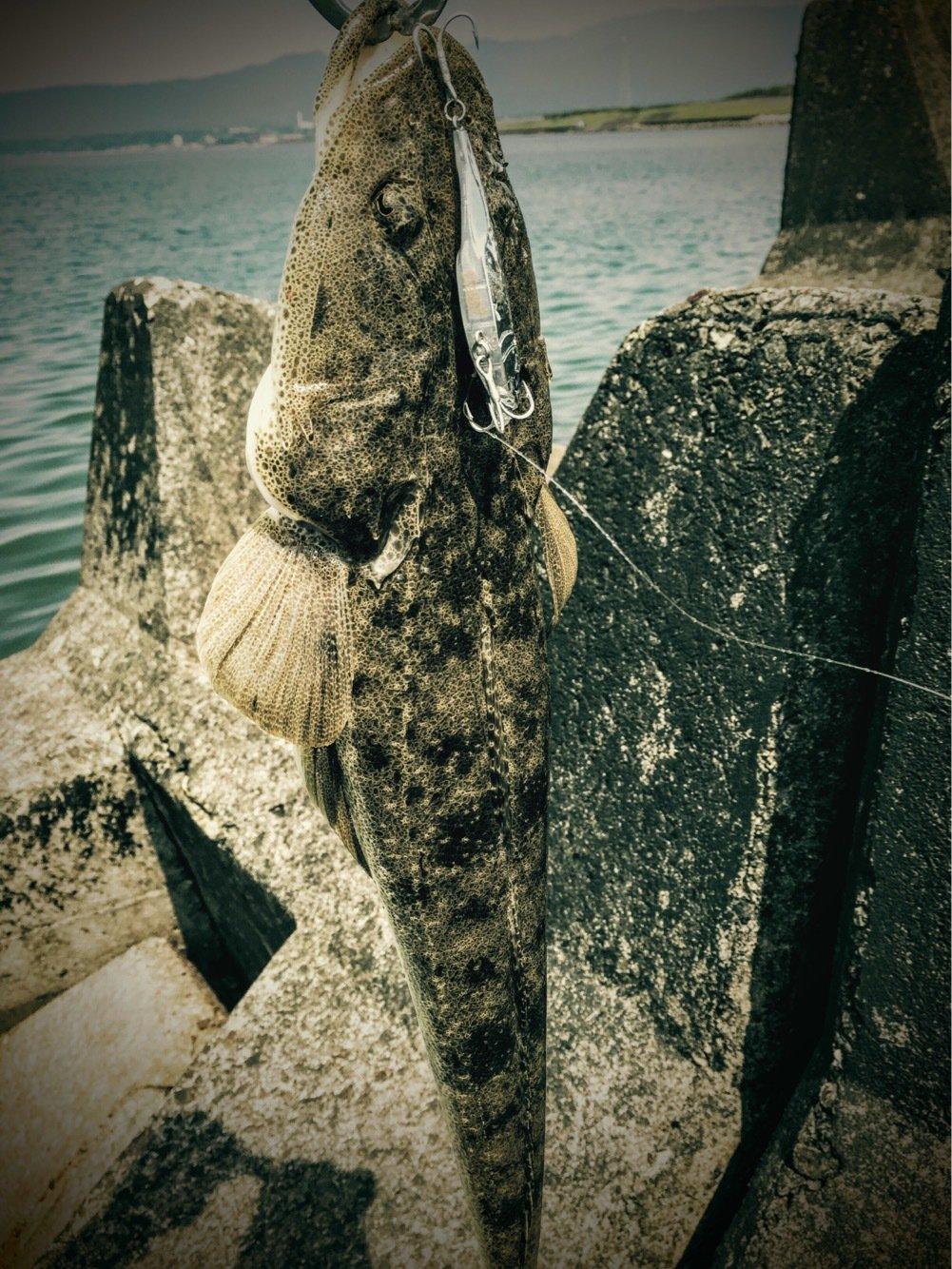 ゆしぴさんの投稿画像,写っている魚はコチ