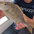 ぼるぎんさんの沖縄県でのフエフキダイの釣果写真