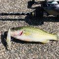 シンデレラさんの滋賀県長浜市での釣果写真