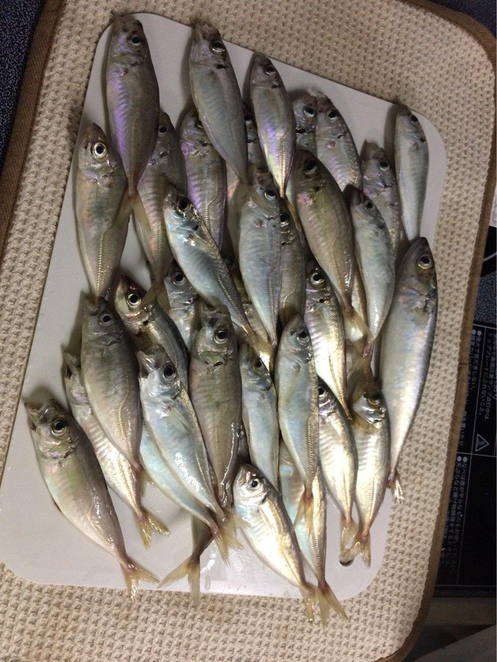 kozywebさんの投稿画像,写っている魚はアジ