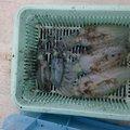 おかっち(oceans)さんの富山県高岡市でのアオリイカの釣果写真