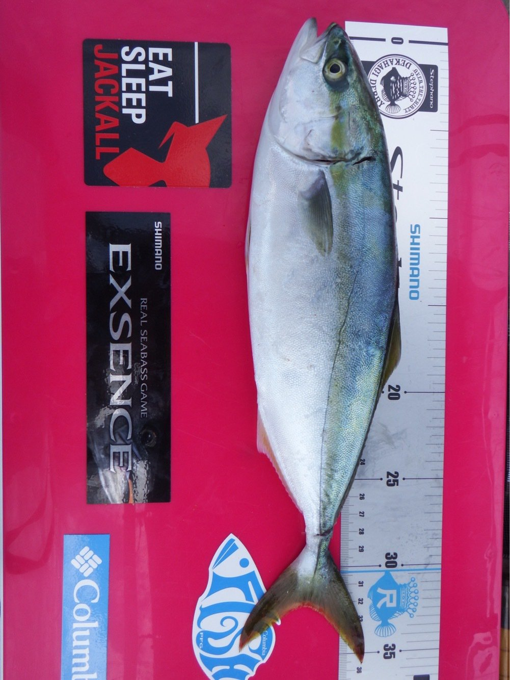 denさんの投稿画像,写っている魚はブリ