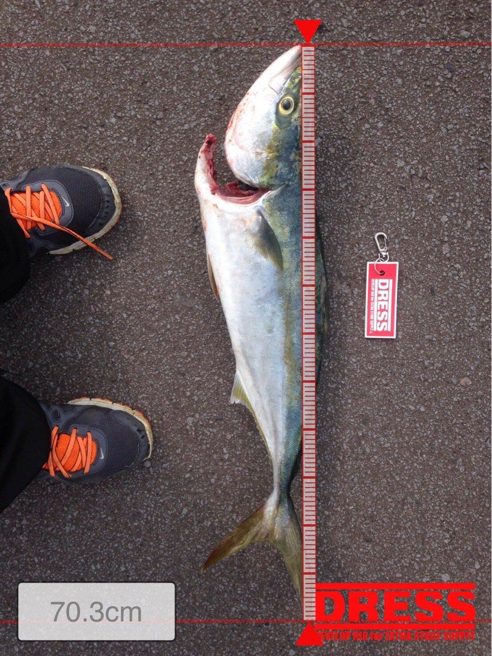 しゅうさんの投稿画像,写っている魚はブリ