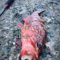 kaito@さんの福岡県北九州市でのキジハタの釣果写真