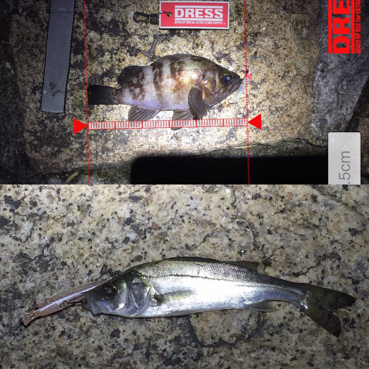 ノリさんさんの投稿画像,写っている魚はメバル