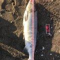 かずやさんの北海道網走市での釣果写真